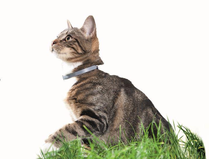 Seresto Cat Collars Long Lasting