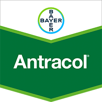 Antracol fungicide product