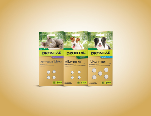 Drontal Allwormer Tablets for Dogs | Advantage Petcare