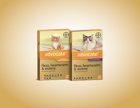 Advocate for Cats Product Image