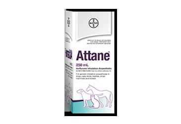 Attane