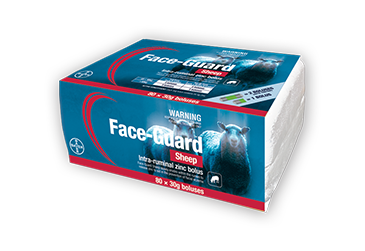 Preventing facial eczema in sheep