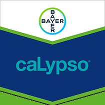 Calypso brand tag