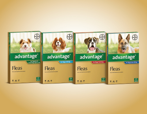 Advantage: flea treatment for dogs product image